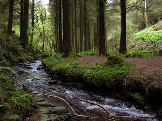 cardinhamwoods