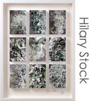 hilary_stock-Lichen